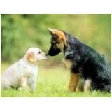 onde encontrar aluguel de cães de guarda Bela Vista