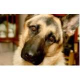 onde encontrar cães de segurança adestrados Rio Pequeno