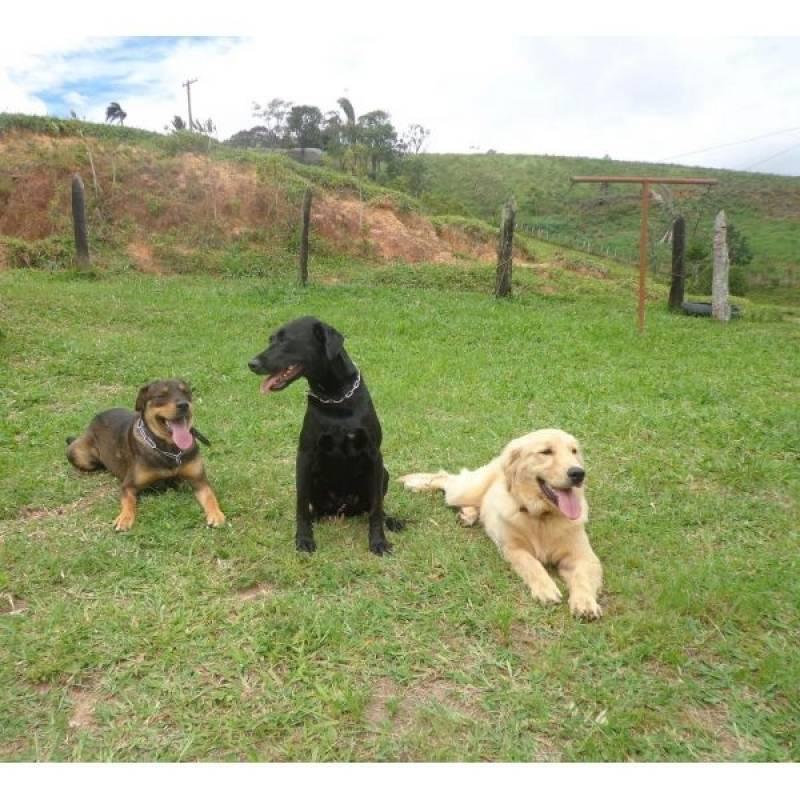 onde encontrar cães farejadores de drogas Aldeia da serra -