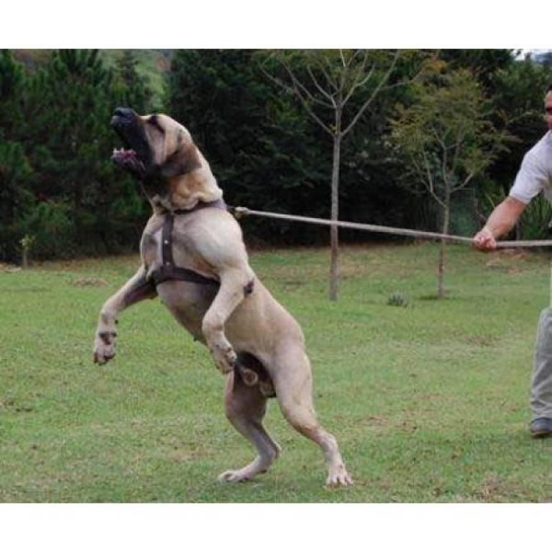 onde encontrar cão de aluguel Granja Viana