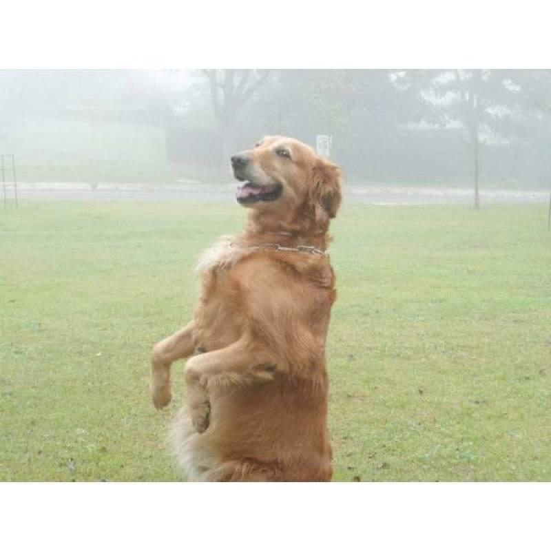 onde encontrar cão de guarda farejador Lapa