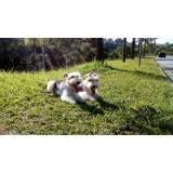 onde encontrar creche de hospedagem para cachorro Rio Pequeno