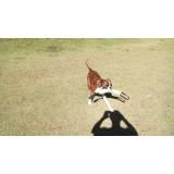 onde encontrar creche para animais de estimação Higienópolis