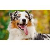 onde encontrar day care para cachorro Aldeia da serra -