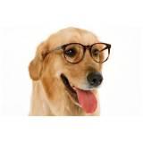 onde encontrar espaço creche para cães Osasco