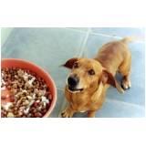 onde encontrar serviços de creche para cachorro Butantã