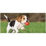 onde encontrar serviços de creche para cães Higienópolis