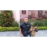 onde encontrar serviços de treinamento para cachorros Aldeia da serra -