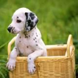 onde encontrar spa de cachorro Higienópolis