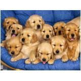 onde encontrar spa para cães Bom Retiro