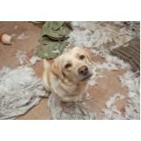 onde encontrar treinamento para cachorro de caça Aldeia da serra -