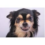 onde encontro adestrador para cão anti social Higienópolis