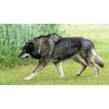 onde encontro adestramento de cachorro selvagens Bela Vista