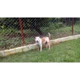 onde encontro adestramento de cachorros bravos Aldeia da serra -