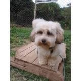 onde encontro creche e day care para cães Higienópolis