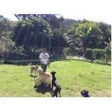 onde encontro curso de adestramento canino Higienópolis