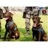 onde encontro curso para treinar cão de faro Rio Pequeno