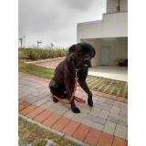onde encontro empresa de cães de segurança Rio Pequeno