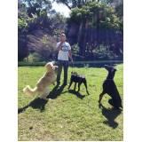 onde encontro hotelzinho de cachorro com atividades físicas Vila Olímpia