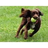 onde encontro hotelzinho para cachorro Butantã