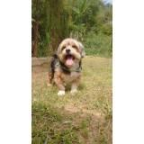 onde encontro serviços de creche para cachorro Higienópolis