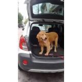 orçamento de adestrador comportamental de cachorro Bela Vista