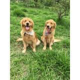 orçamento de adestrador de cães golden Carapicuíba