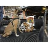 orçamento de cachorro farejador de pessoas Higienópolis