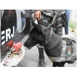 orçamento de cães de faro de explosivos Raposo Tavares