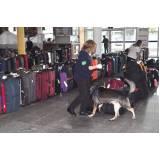 orçamento de cães farejadores aeroporto Rio Pequeno