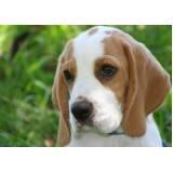 orçamento de cães farejadores no Brasil Raposo Tavares