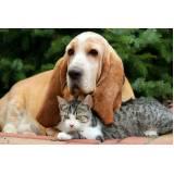 orçamento de cão farejador de animais Alphaville