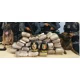 orçamento de cão farejador drogas Itapevi