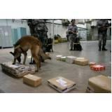 orçamento de treinar cão para farejar Carapicuíba