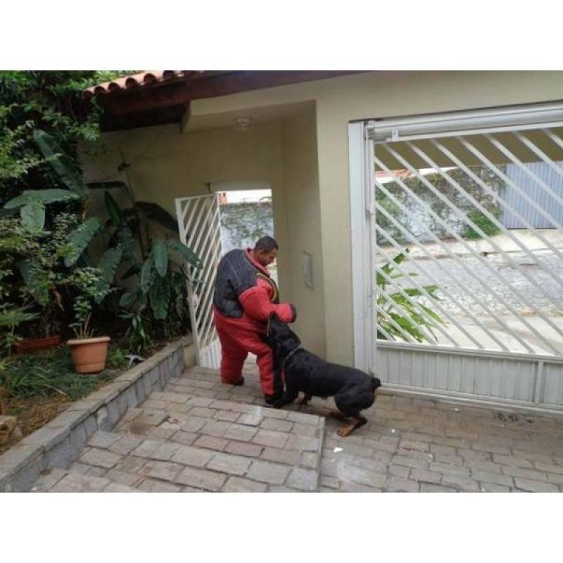preço de especialista de encontrar cachorro Vila Mariana