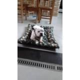 quanto custa adestrador comportamental de cachorro Jaguaré