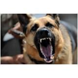 quanto custa adestrador de cão bravo Barueri