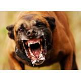 quanto custa adestramento cachorro bravo Bela Vista