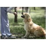 quanto custa alugar cachorro de segurança Santana de Parnaíba