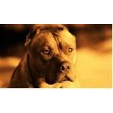 quanto custa aluguel de cães de guarda Rio Pequeno