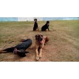 quanto custa aluguel de cães de segurança Granja Viana