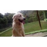 quanto custa creche de cachorros golden Jaguaré