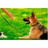 quanto custa curso de adestramento de cães presencial Bela Vista