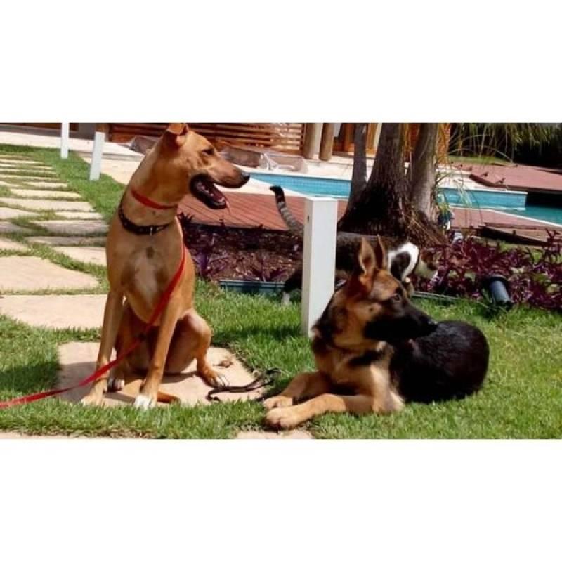 quanto custa curso para adestrador de cães Raposo Tavares