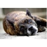 quanto custa hotelzinho para cachorro idoso Rio Pequeno