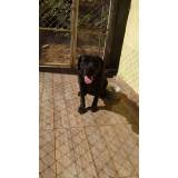 quanto custa locação de cachorro segurança Morumbi