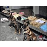 quanto custa treinador de cães farejadores de droga Alphaville