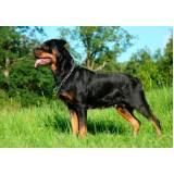 segurança com cães adestrados Raposo Tavares