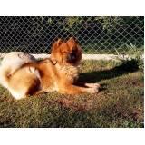 Alugar Cães de Segurança Adestrados