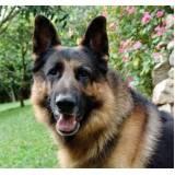 Cães de Segurança Adestrados